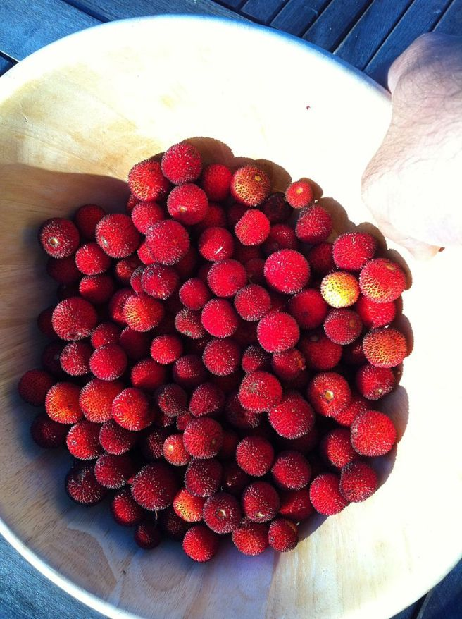 strawberry tree berries, edible plants